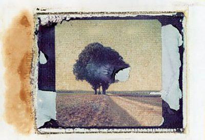 Schmelz Fotodesign, Baum auf dem Feld, Polaroid Image Transfer, Fotokunst, Slow Pictures