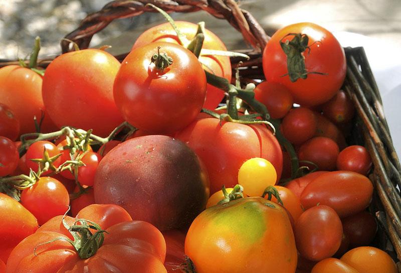 Foodfotografie, Tomaten im Korb, Werbefotografie, Schmelz Fotodesign