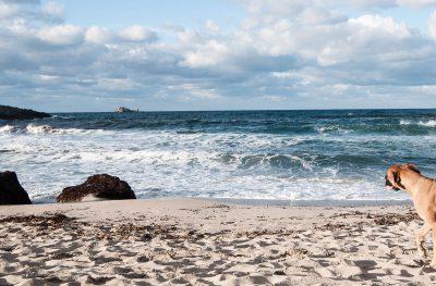 Schmelz Fotodesign, Hund am Strand auf Mallorca, Landschaftsfotografie, Tierfotografie